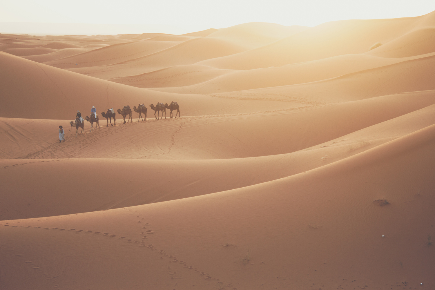 camels desert people walking tracks